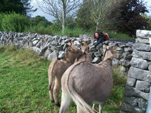 Gift Fox & Donkey Friends