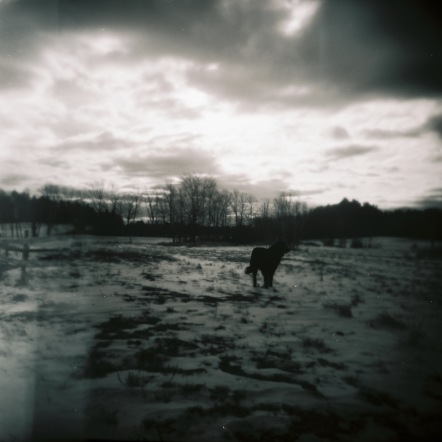 Holga photo I took of 2010's winter