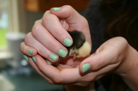 The Polish chick in my well-manicured hands has nothing to do with tote bags or goats, but it's so cute! Amiright?!