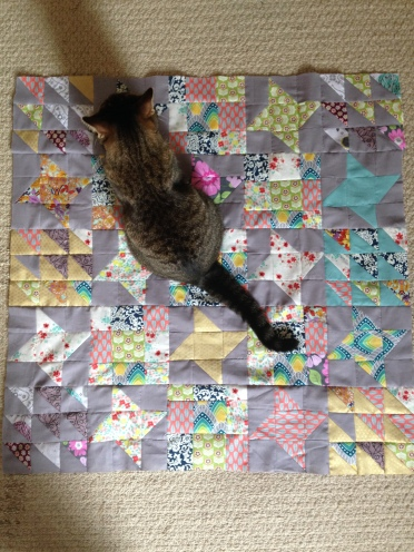 stars, quilt, cat, quilt top